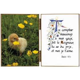 Polluelo en la hierba del campo